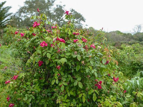 Vintage Roses 2-4-w.jpg