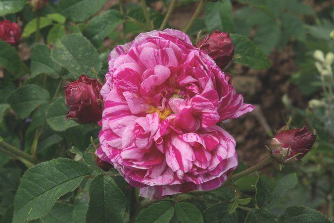 Image Result For Fragrance