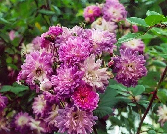 Violette filtered-3-g.jpg
