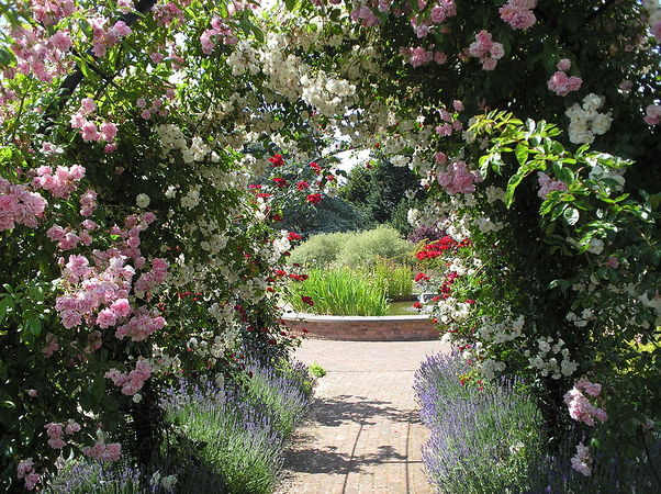 Albans Rose Arch at RNRS gardens of the Rose.JPG