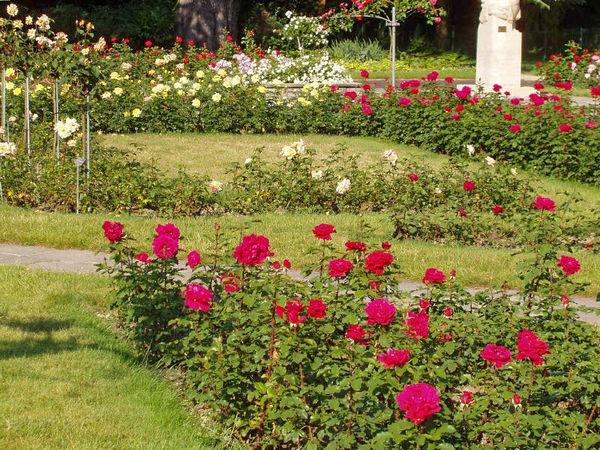 Grange Roseraie Geneva 2-g.jpg