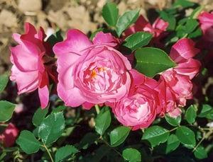 Blooms By Brooke Long Beach