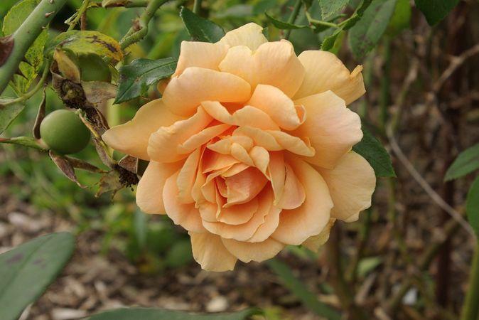 Orange Everglow (1)-w.jpg