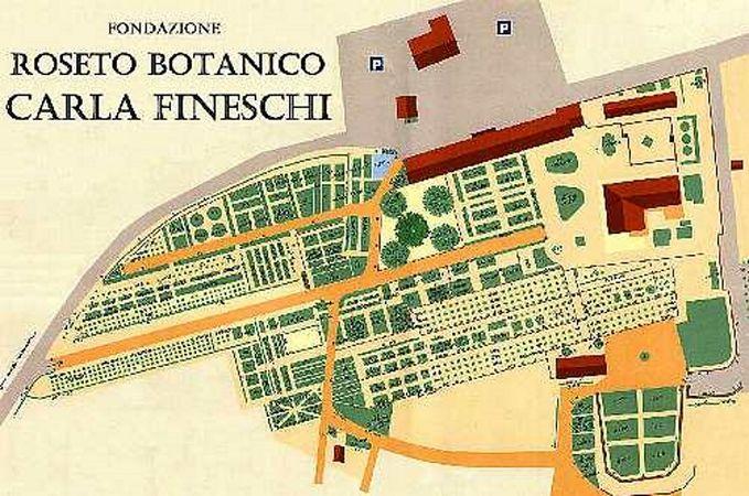 Fineschi rose4.jpg