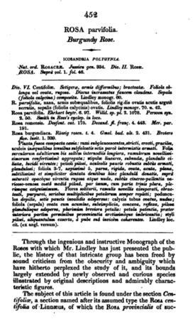 R. parvifolia, Text 1.PNG