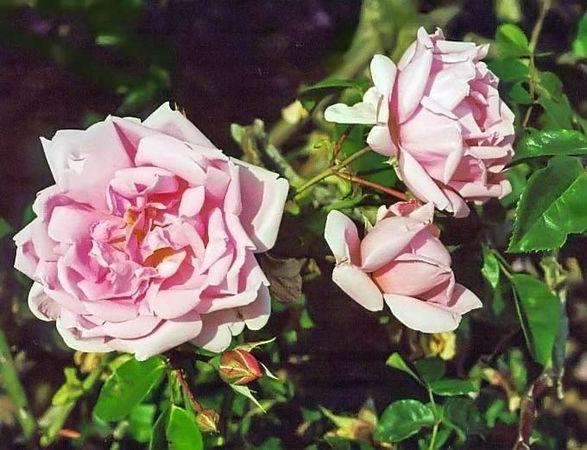 Alida Lovett filtered-3-g.jpg