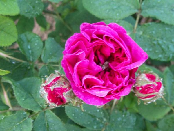 Fleur de Pelletier, Stéphane Barth, L'Hay 3-w.jpg