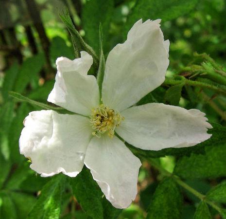 Adiantifolia, Stéphane Barth, L'Hay 3-w.jpg