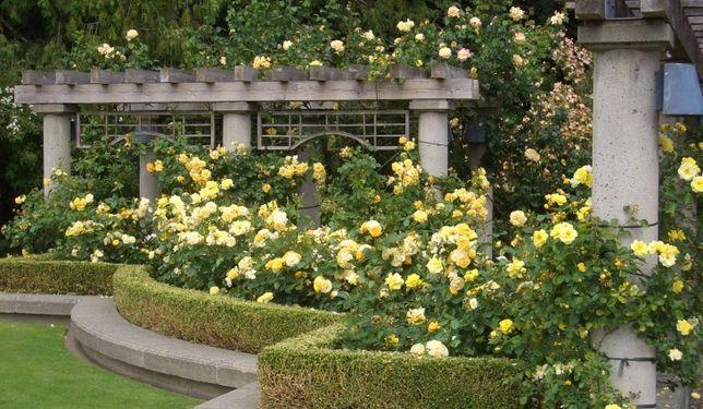 Portland rose-test-garden-portland-oregon-best-time-to-vis-730x425.jpg