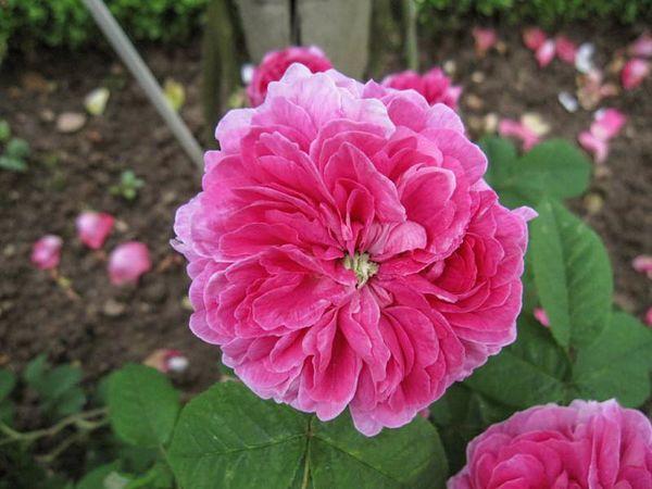 Fleur de Pelletier, Stéphane Barth, L'Hay 2-w.jpg