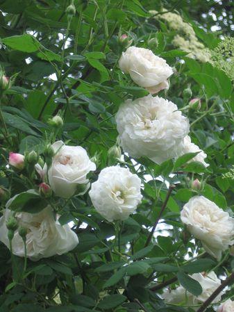 Mme plantier 1. juni 2008 (2).jpg