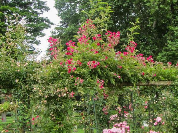 Crimson Rambler, Stéphane Barth, L'Hay 5-w.jpg