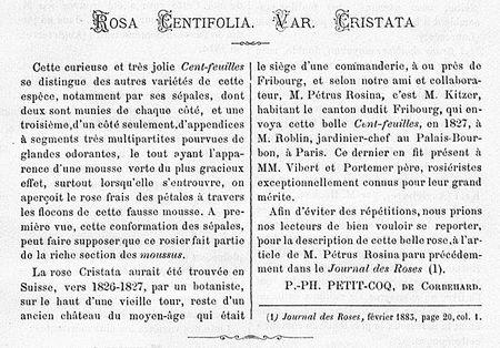 Cristata 1885-57.jpg