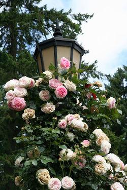 Portland International Rose Test Garden4.jpg