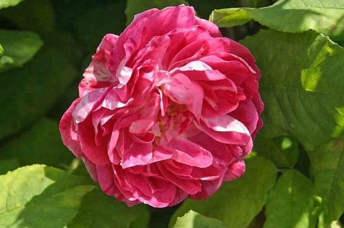 Belle doria2 filtered-3-g.jpg