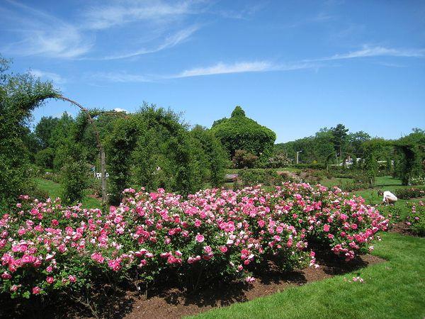 Elizabeth Park, Hartford, CT, WikimediaCommons 3.jpg