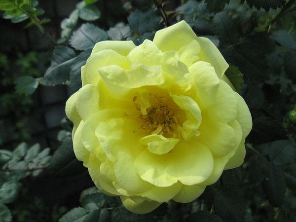R.pimp. Double Yellow, Stéphane Barth, L'Hay 4.jpg