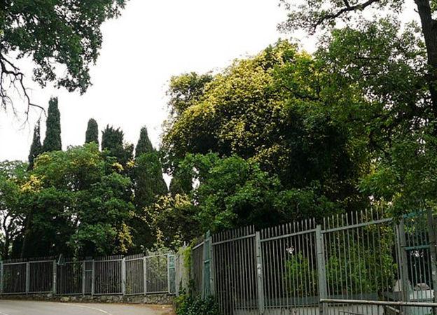 Banksia Lutea 3, Krim-w.jpg