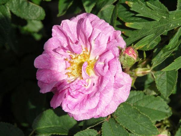 Eulalia Lebrun 3.jpg