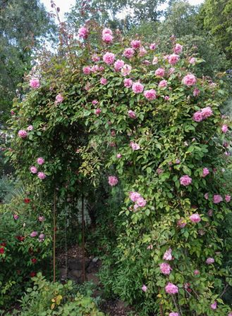 Florence Bowers' Pink Tea 4-w.jpg