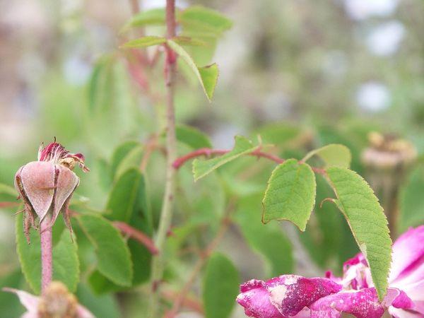 BeauNarcisse5 G115 20110621.jpg