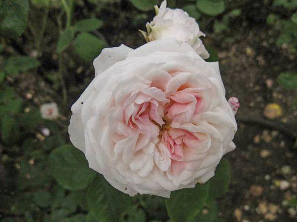 Bouquet de Marie, Stéphane Barth, L'Hay 2-w.jpg