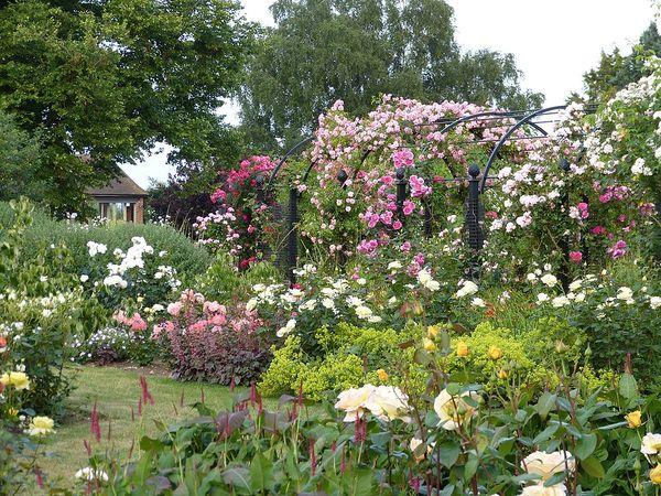 Albans RNRS gardens inc pergola.JPG