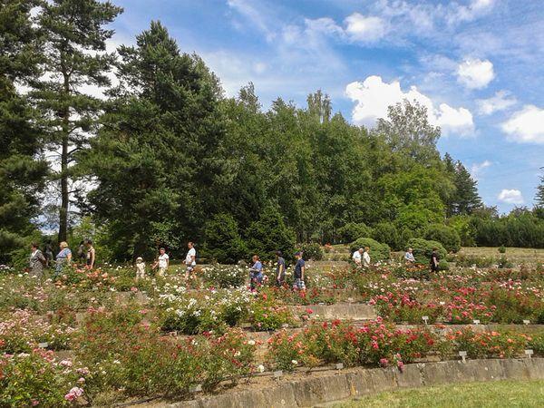 Arborétum Borová Hora 3-w.jpg