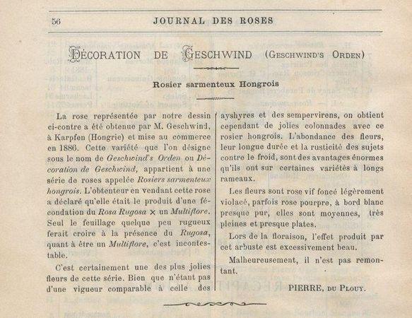Décoration de Geschwind, Geschwinds Orden, Journal des Roses 1896.JPG