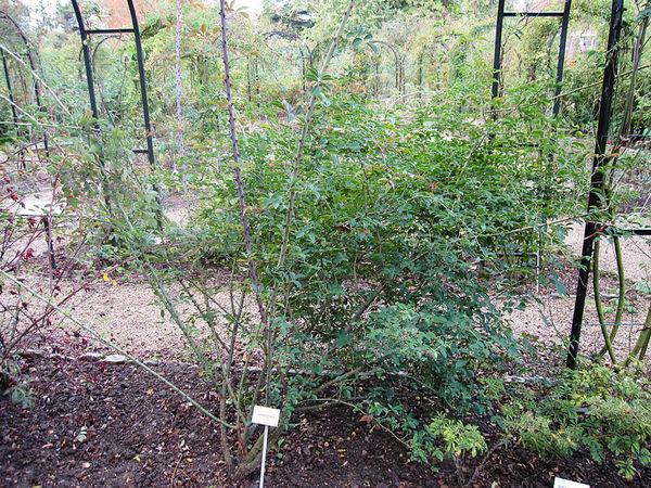 Adiantifolia, Stéphane Barth, L'Hay 2-w.jpg