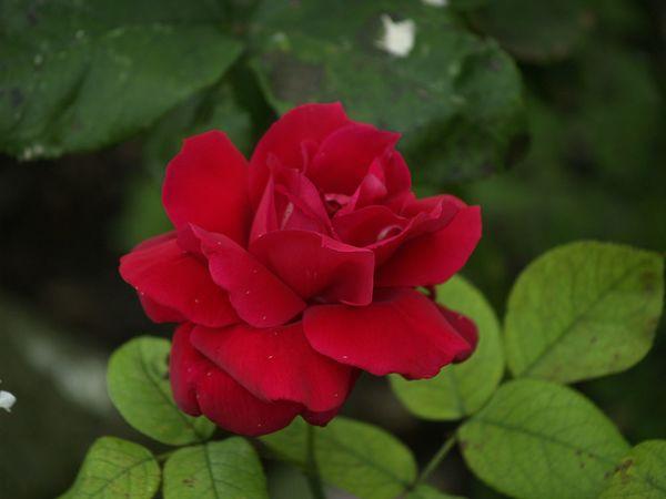 Rosa Hanne-2020-07-18- 7189245.jpg