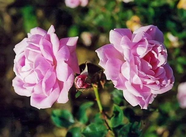 Bebe Fleuri filtered-3-g.jpg