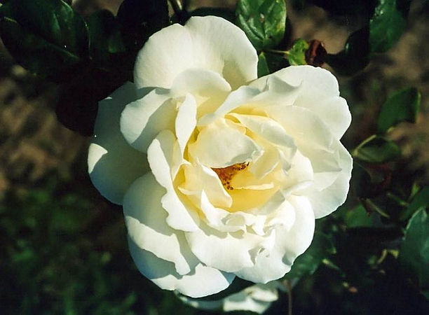 Blanc pur filtered-3-g.jpg