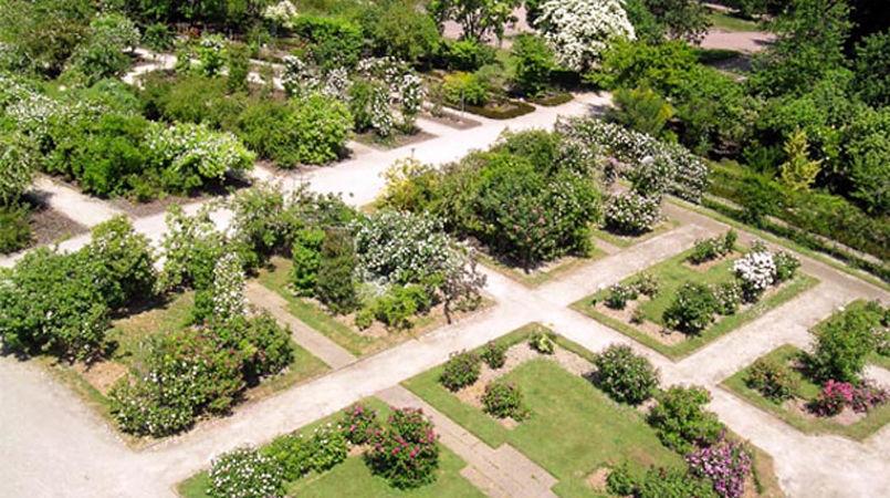 Parc de la Tête d'Or, Société Française des Roses 2-w.jpg