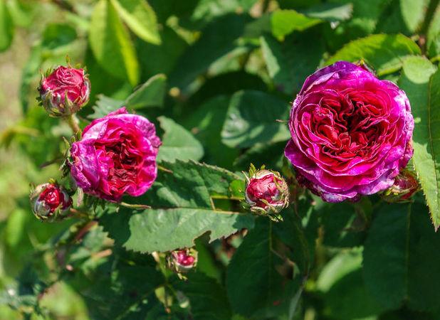 La Gloire des Jardins-Commer-IMGP0538-1-w.jpg