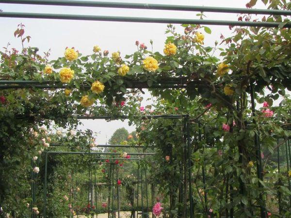 Lemon Pillar, Stéphane Barth, L'Hay 4.jpg