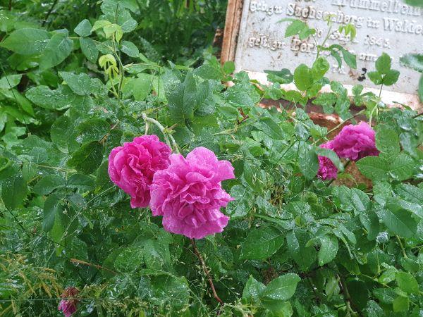 FOR Blüten1.jpg