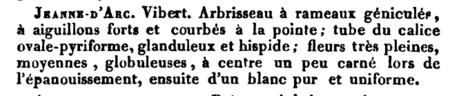 Jeanne d'Arc, Manuel Complet de l'Amateur de Roses, 1836, M. Boitard, Seite 240.PNG