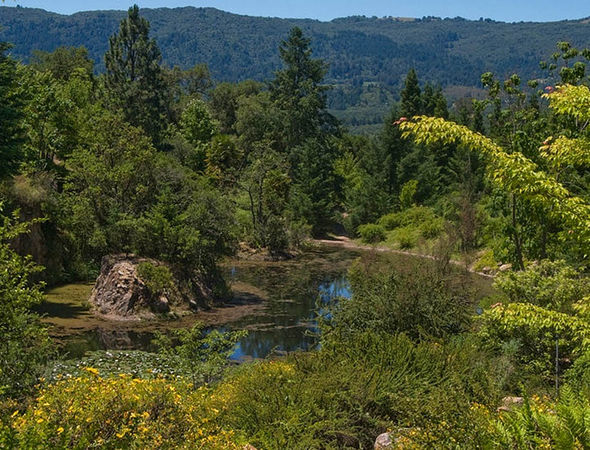Quarryhill Botanical Garden 1, Cass Bernstein-2-w.jpg