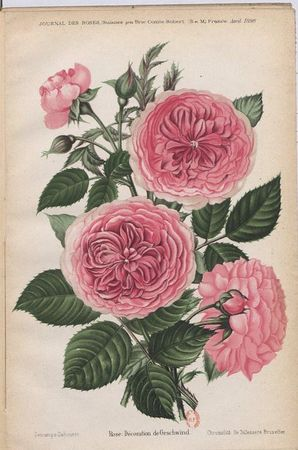 Decoration de Geschwind, Geschwinds Orden, Journal des Roses 1896.JPG