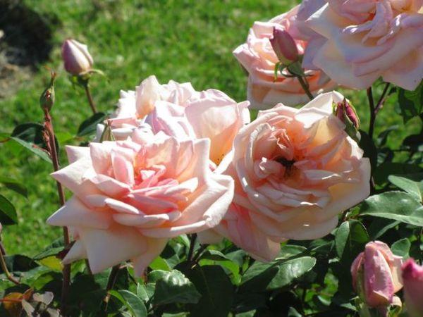 Jean Ducher, Adelaide Botanic Garden 1.jpg