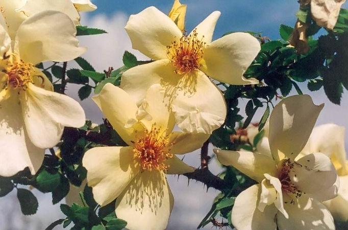 Frühlingsgold filtered-3-g.jpg