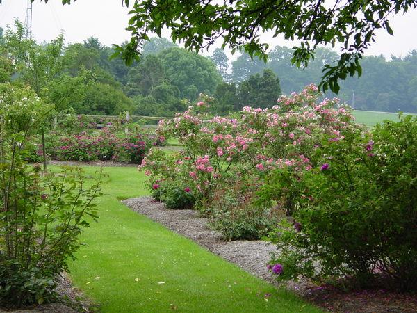 Wooster Rose Garden DSC00031.JPG