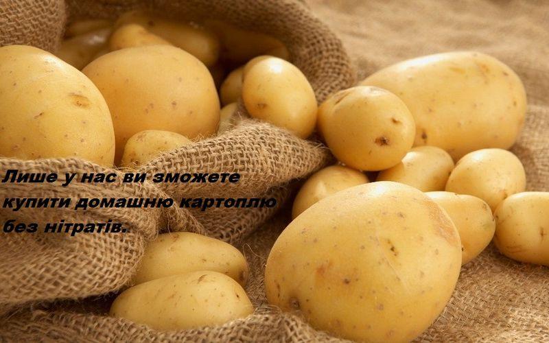 Файл:Moloda-kartoplya.jpg