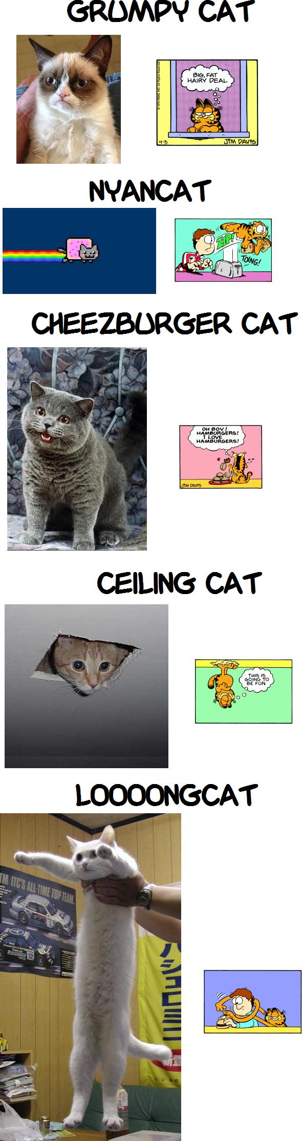 Cat Memes.png