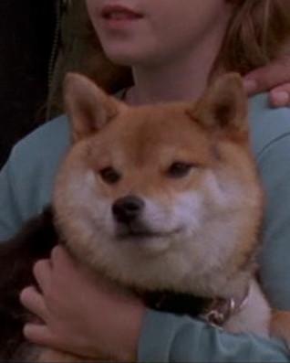File:Cassandra's dog.jpg