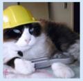 Кот Инженер ава.png