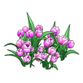 Pinktulips.png