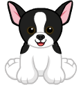 Tuxedochihuahuaavatar.png