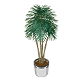 Indoorpalmplant.png